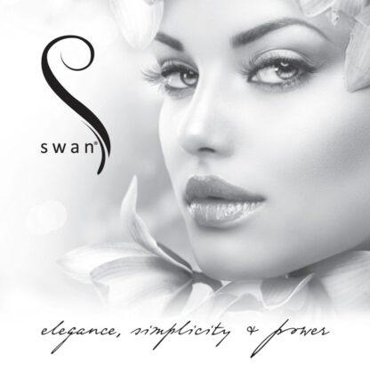 Swan The Silver Swan